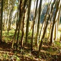 タケノコ山整備①