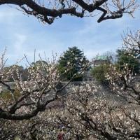 大阪城公園 (3)