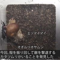 日記(12.4)カタツムリの話