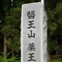 福島県会津坂下町、杉の糸桜です!!