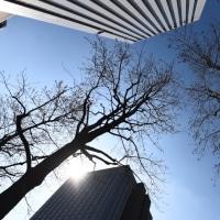 朝 OBPを通り抜けて見た。木々もまだまだ眠りから覚めない。