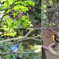 『谷戸川渓谷』 野鳥たち