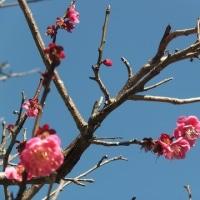 今年も春がやってきました。