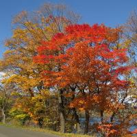 洞爺湖畔 紅葉まっさかり♪ (10月29日)