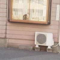札幌まちなか探検隊    昨日の景色(4/24)