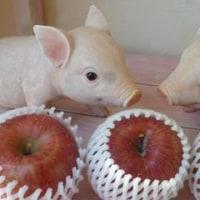 青森のおいしい林檎