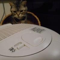 猫も保湿。
