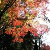 滋賀紅葉ツー(鶏足寺・石道寺)