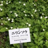 「椿」花より葉がまた楽し  明日メーデー