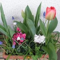 春に咲く球根を植えましょう!