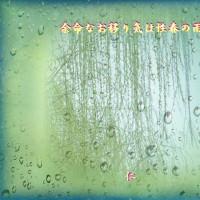 『 余命なお移り気は性春の雨 』余命をあそぶ交心qy2006