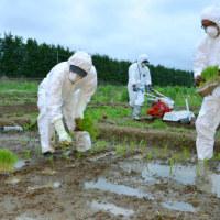 関東とチェルノブイリの汚染度を比べる