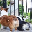 お庭遊びラスト♪…と、観察のカイヌシ!