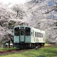 樽見鉄道の桜 谷汲口駅(岐阜県)