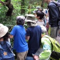 2017年6月18日 日曜日 カタツムリの観察会
