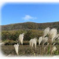 吾妻山の花々