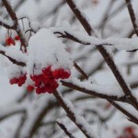 雪の中お散歩♪クリ