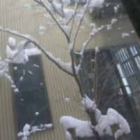 この冬一番の寒さが「雪の華」を咲かせて… ^_^