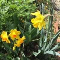 春の日に花と輝く