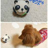 パンダさんとご対面