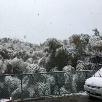 雪が積もり始めた
