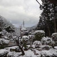 きょうも雪!
