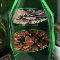 春の気まま旅 18日目 釣ったアジを肴にカンパイ