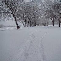 柴ワンコの「りく」 初めての雪