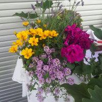 花の寄せ植えふたつ  ご注文ひとつ😄
