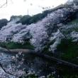 九段、千鳥ヶ淵の夜桜