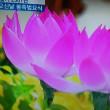 花まつり(曹渓寺)