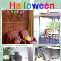 祝杯〜!(╹◡╹)猫と引越し宅急便〜!Halloween