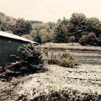 3回目の冬