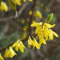 散歩道に咲く春色の花
