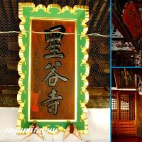 坂東霊場の一寺「妙法山星谷寺」の白梅が咲き始めた!!