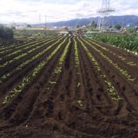 管理川尻農園です