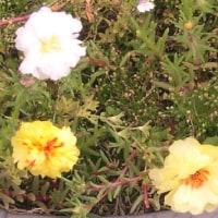 テラスの花  22