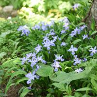 黒姫高原の杉林の中に、見事な庭がありました!・・・5月23日