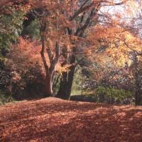 2016年12月10日(土)  繖山(きぬがさやま 滋賀県能登川町 433m)