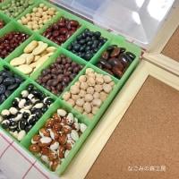お豆の標本 BEANS COLLECTIONを作ります