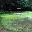 高齢の水曜ジョイフルウォークは、トンボ池コース。