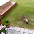 庭にカニがいたよ