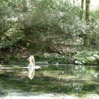 池山水源  ぜひ ご覧下さい。
