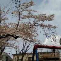 さ~く~ら~ 桜!