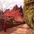高野山で神秘体験品川実花から光りの交信!