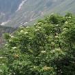 谷川岳で出会った高山植物たち♪