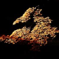 紅葉 (花 4125)