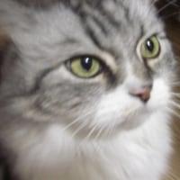 ぜんざいが好きな猫~♪