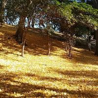 宇和田公園・黄葉。