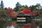 昭和記念公園 日本庭園の紅葉2016